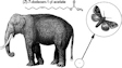 Asian elephants and many moths share a pheromone molecule
